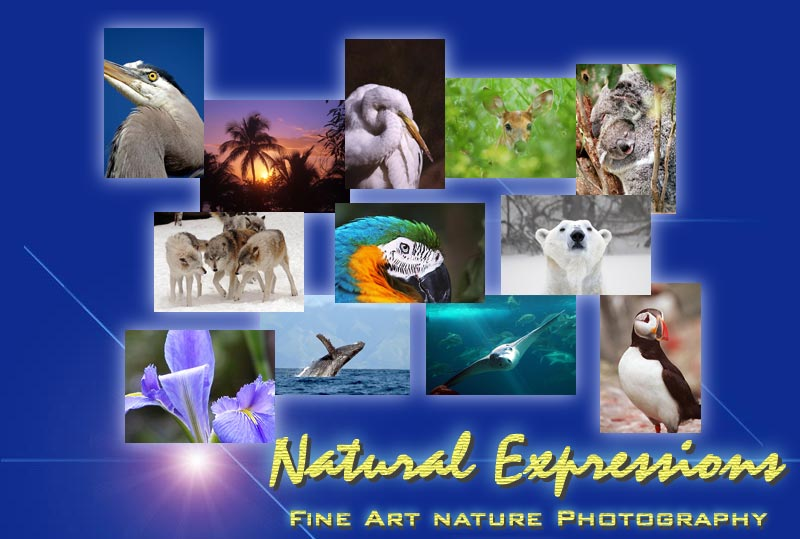 Natural Expressions Fine Art Nature Photography
